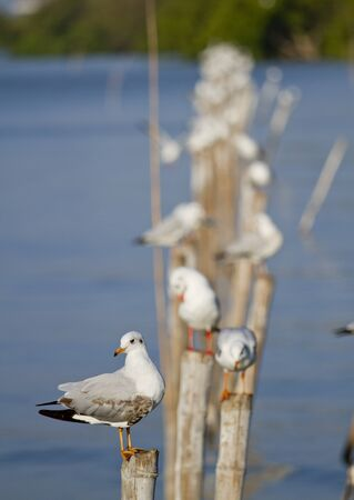 Seagull on the bamboo stick Stock Photo - 12944718