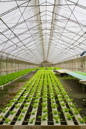 the greenhouse: Hydroponic farm.