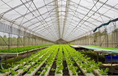 Hydroponic farm.