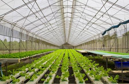plant nursery: Hydroponic farm.