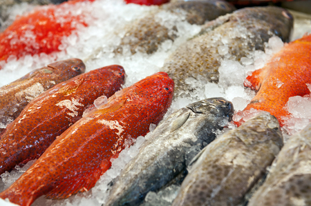 protien: Fresh Fishes in Fish Market