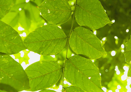 vigorously: Green leafs background Stock Photo