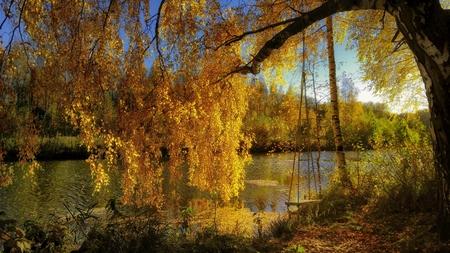 autumn scenery. Archivio Fotografico - 111680762