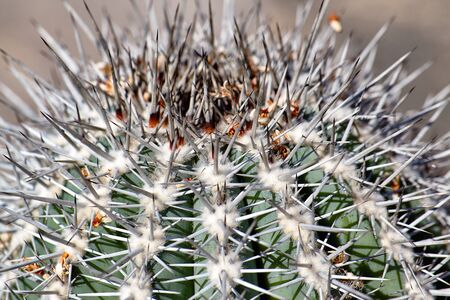 Closeup spines of a cactus