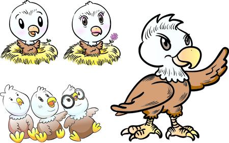 aguila calva: carácter joven águila