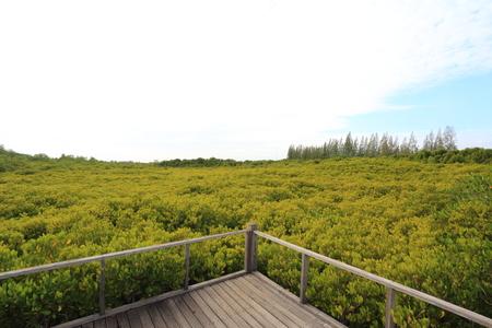 yellowrn: Mangrove forest and wood bridge Stock Photo