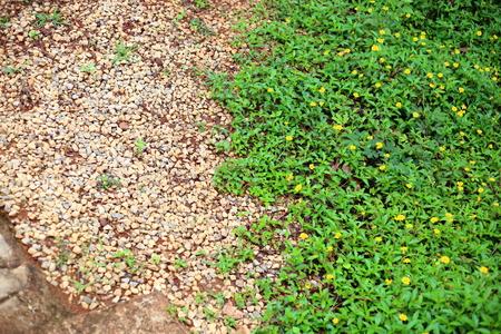 creeping: Creeping Daisy and gravel Stock Photo