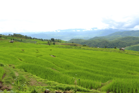 green fields: Rice terraces in Mae Chaem