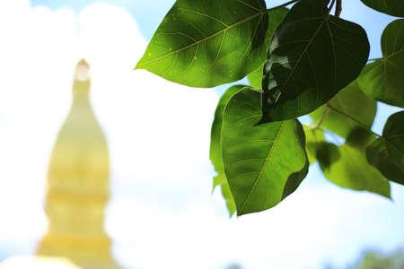 templo: Templo de oro en Wat pong pah nong en Tailandia