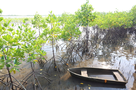 prong: Mangrove trees of Thung  Prong Thong forest in Rayong at Thailand Stock Photo