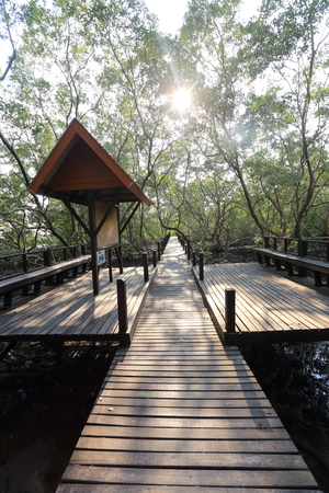 prong: Wood bridge of Thung  Prong Thong forest in Rayong at Thailand