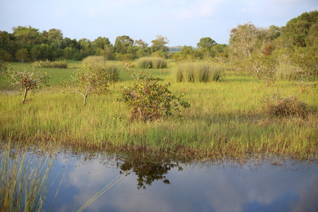 Wetland in Rayong Thailland Stock Photo