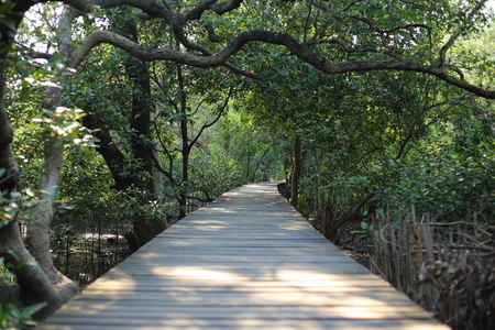 Walkway of mangrove forest in Rayong at Thailand