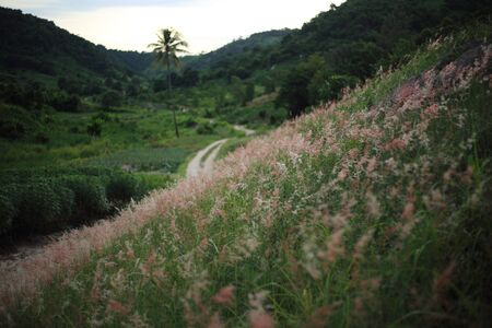 repens: Melinis repens and mountains