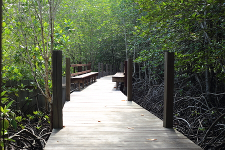 Walkway made from wood and mangrove field of Thung Prong Thong forest in Rayong at Thailand
