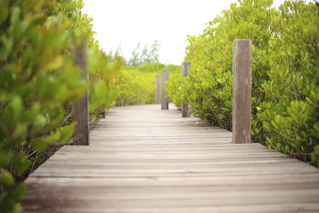 prong: Walkway made from wood and mangrove field of Thung Prong Thong forest in Rayong at Thailand