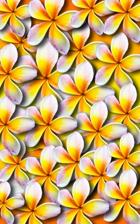 lei: Beautiful plumeria background Stock Photo