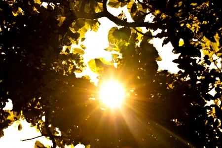 leaf with sun ray photo