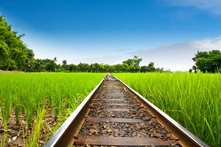 railway on field rice green grass photo