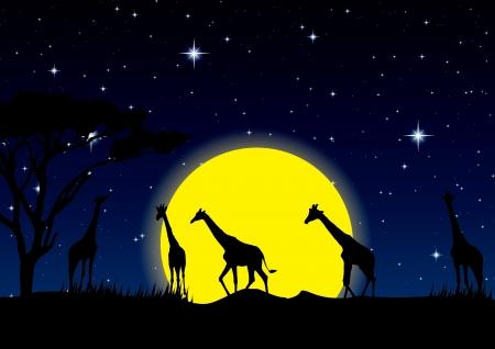 night sky with stars and full Moon in safari, vector illustration Stock Vector - 16319524