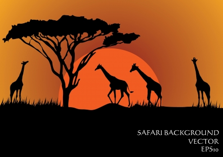 ilustraciones africanas: Siluetas de las jirafas en el safari ilustración vectorial puesta de sol de fondo
