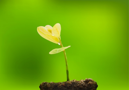 beautiful New life tree and green background