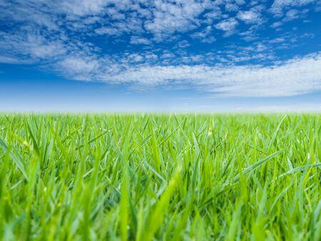 l'herbe verte et de ciel bleu
