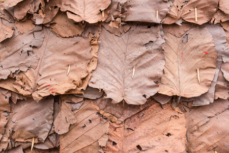 dry leaves texture background photo