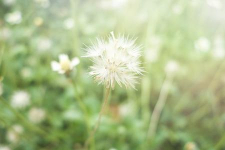 flowers sun: Grass flowers and sun light
