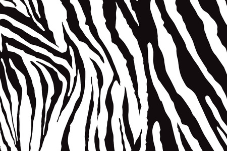 zebra pattern: Zebra Pattern Vector Illustration
