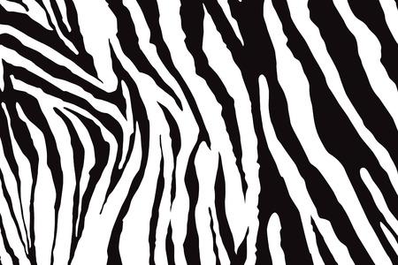Zebra Pattern Vector Çizim