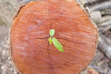 green young on the timber