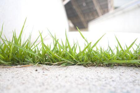 green grass and background Stok Fotoğraf