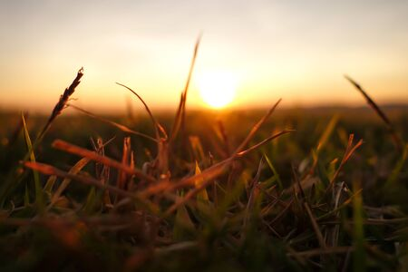 Green grass background with sunset.