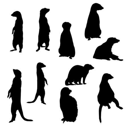 Collection silhouettes of meerkats in different postures