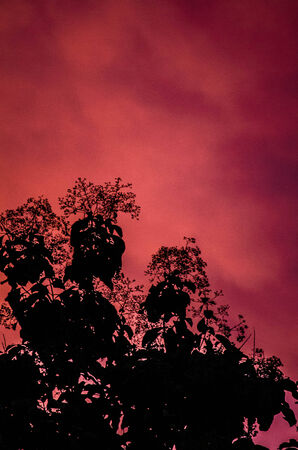 Red light in the atmosphere before a rain  photo