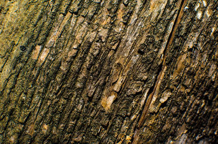 naturally: Trees occur naturally beautiful with different textures can be used in various fields as well.