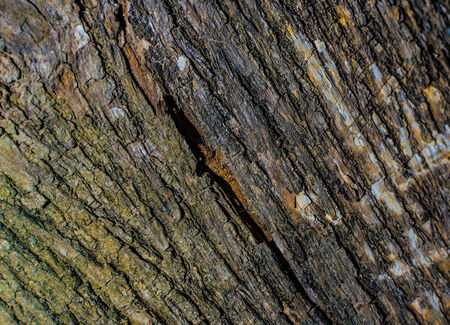 occur: Trees occur naturally beautiful with different textures can be used in various fields as well