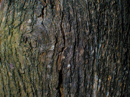naturally: Trees occur naturally beautiful with different textures can be used in various fields as well