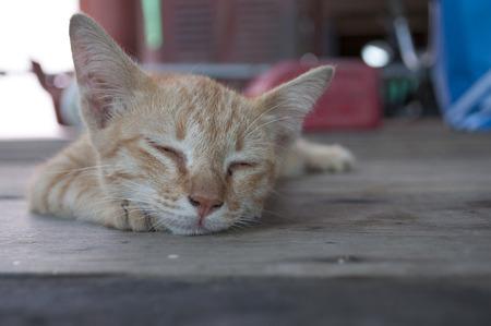 Little red kitten sleep on wood Stock fotó