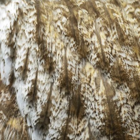 근접 촬영 큰 회색 올빼미의 깃털