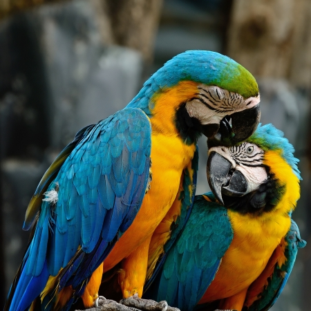 aviary: Lover of colorful Blue and Gold Macaw aviary