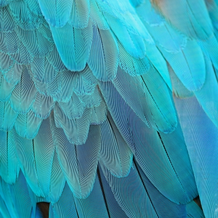 Blue and Gold Macaw feathers Stock Photo - 21199395