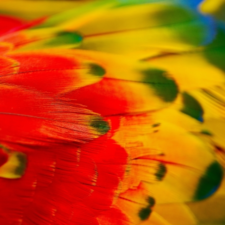 Scarlet Macaw feathers Stock Photo