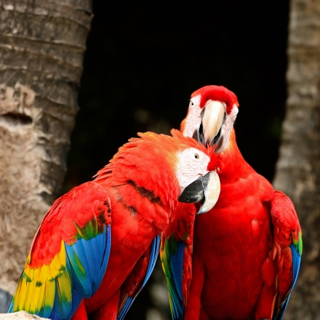 aviary: Beautiful Scarlet Macaw aviary
