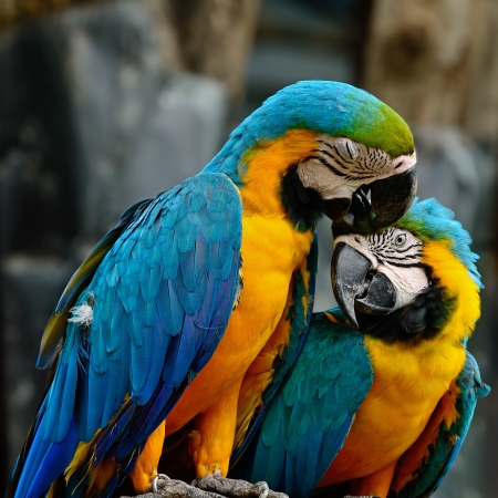 Lover of colorful Blue and Gold Macaw aviary, sitting on the log Stock Photo