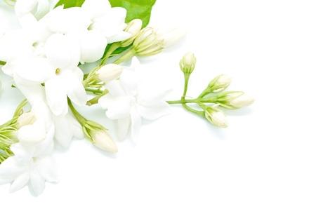 jasmine flower: White Jasmine flower, isolated on a white background