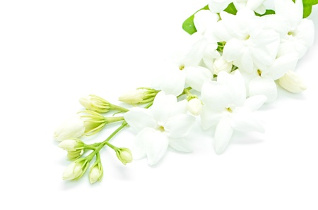 White Jasmine flower, isolated on a white background photo