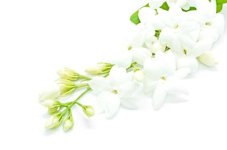 jasmine: White Jasmine flower, isolated on a white background