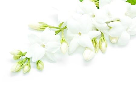 白いジャスミンの花、白い背景で隔離
